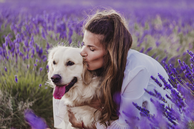 beautiful woman kissing her golden retriever dog in lavender fields at sunset. Pets outdoors and lifestyle.